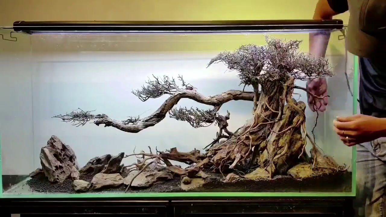 Fam Aqua Design (Lũa ghép bonsai dáng cổ thụ) | Hồ cá nước ...