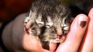 A kitten born recently in Rhode Island has two faces.  The kitten has four eyes, two noses, two ears and...