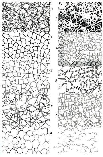 D6 456 Nature/Pattern/Texture/Architecture | nature's