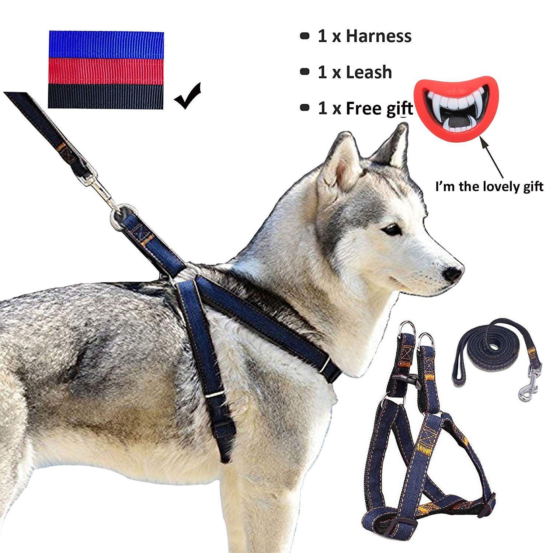 Puppy Leash Training Age Dog Training By Sam Ma Dog Harness