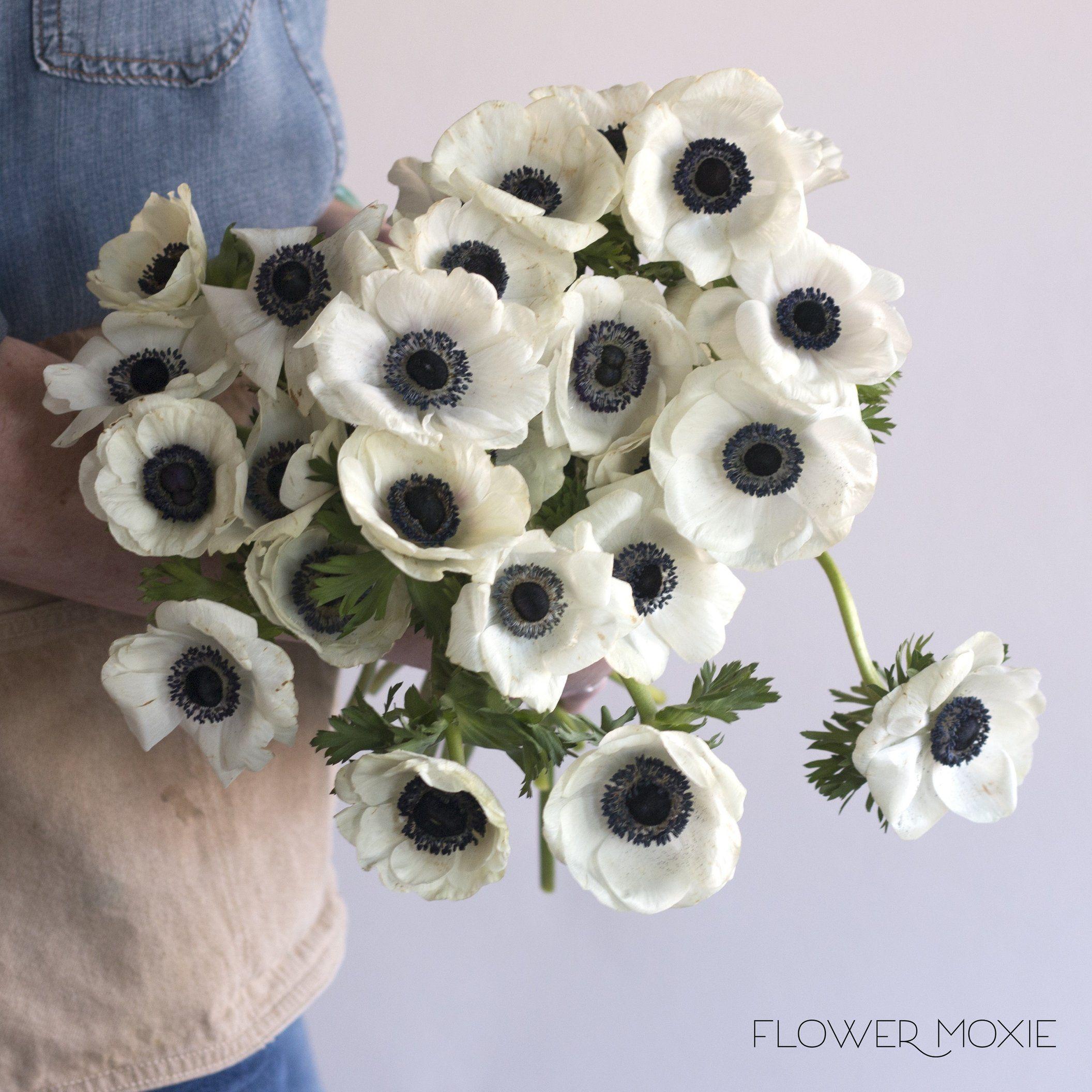 Anemone White Diyflowers Diyweddingflowers Affordableflowers Weddingaffordable Doityourselfflowers Di White Anemone Flower Anemone Flower White Anemone