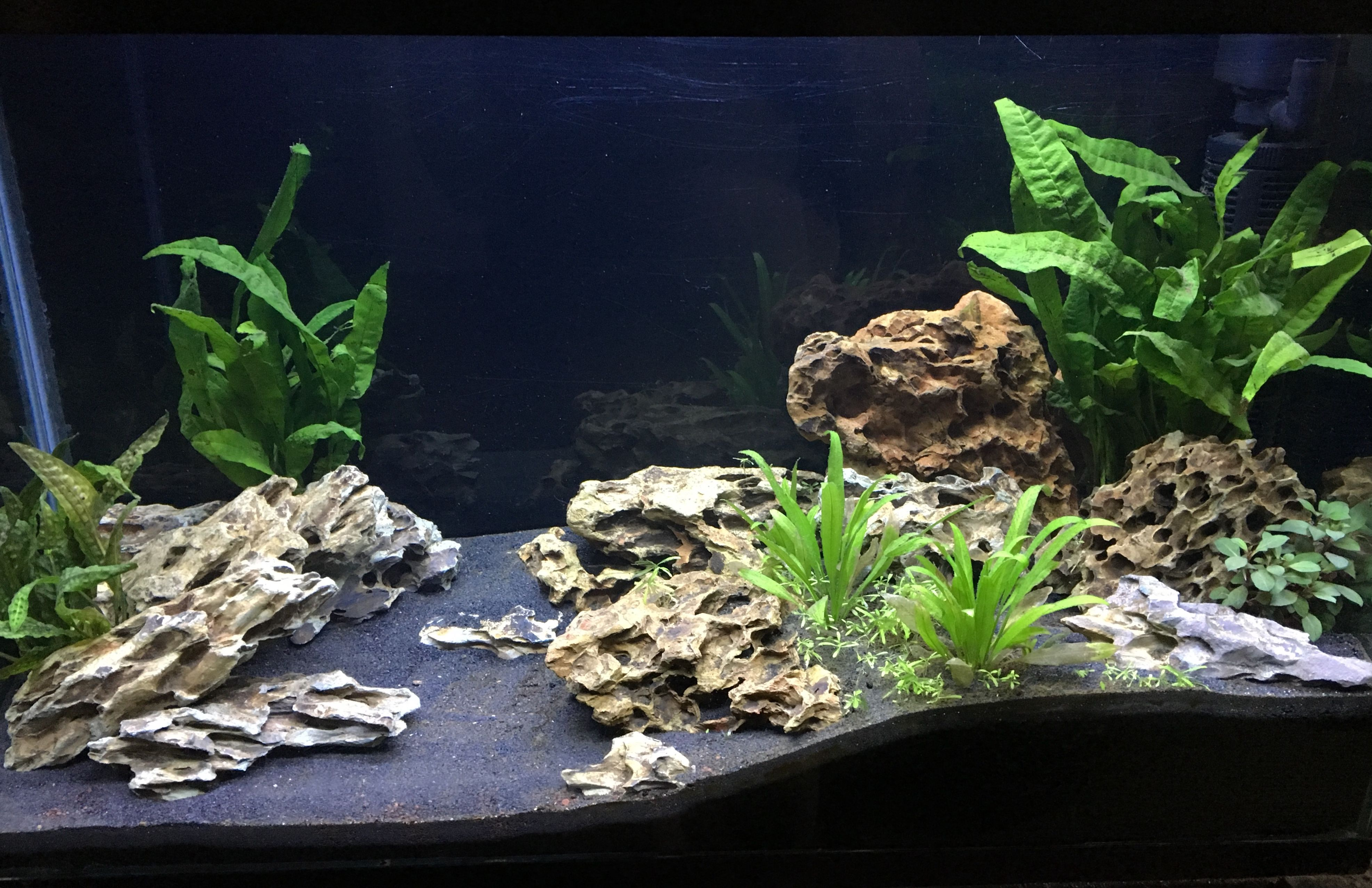 Nature Free Style Scape Using Dragon Stone And Planting Aquascape Planted Aquarium Fish Tank