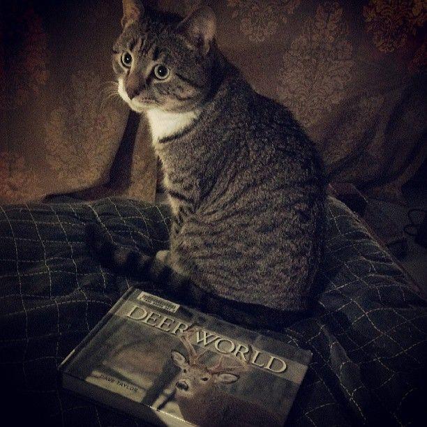 I Wanna Read This One Tonight Mum Cats Animals Reading