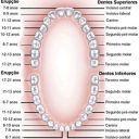 anatomia, dentes, boca