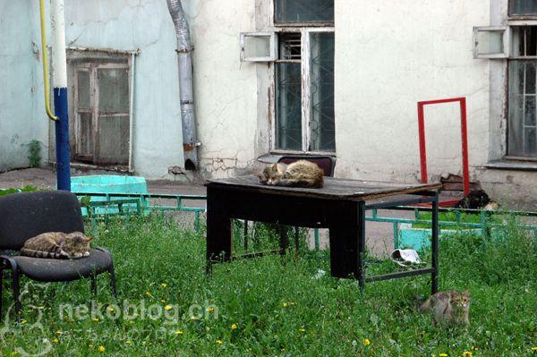 backyard somewhere in Moscow