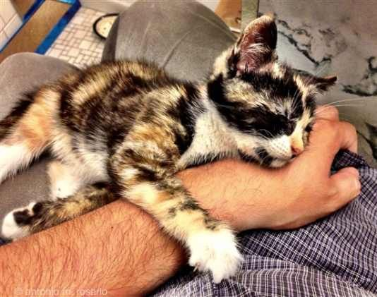 Stroke of Luck: Calico Kitten Rescued from Moving Mercedes