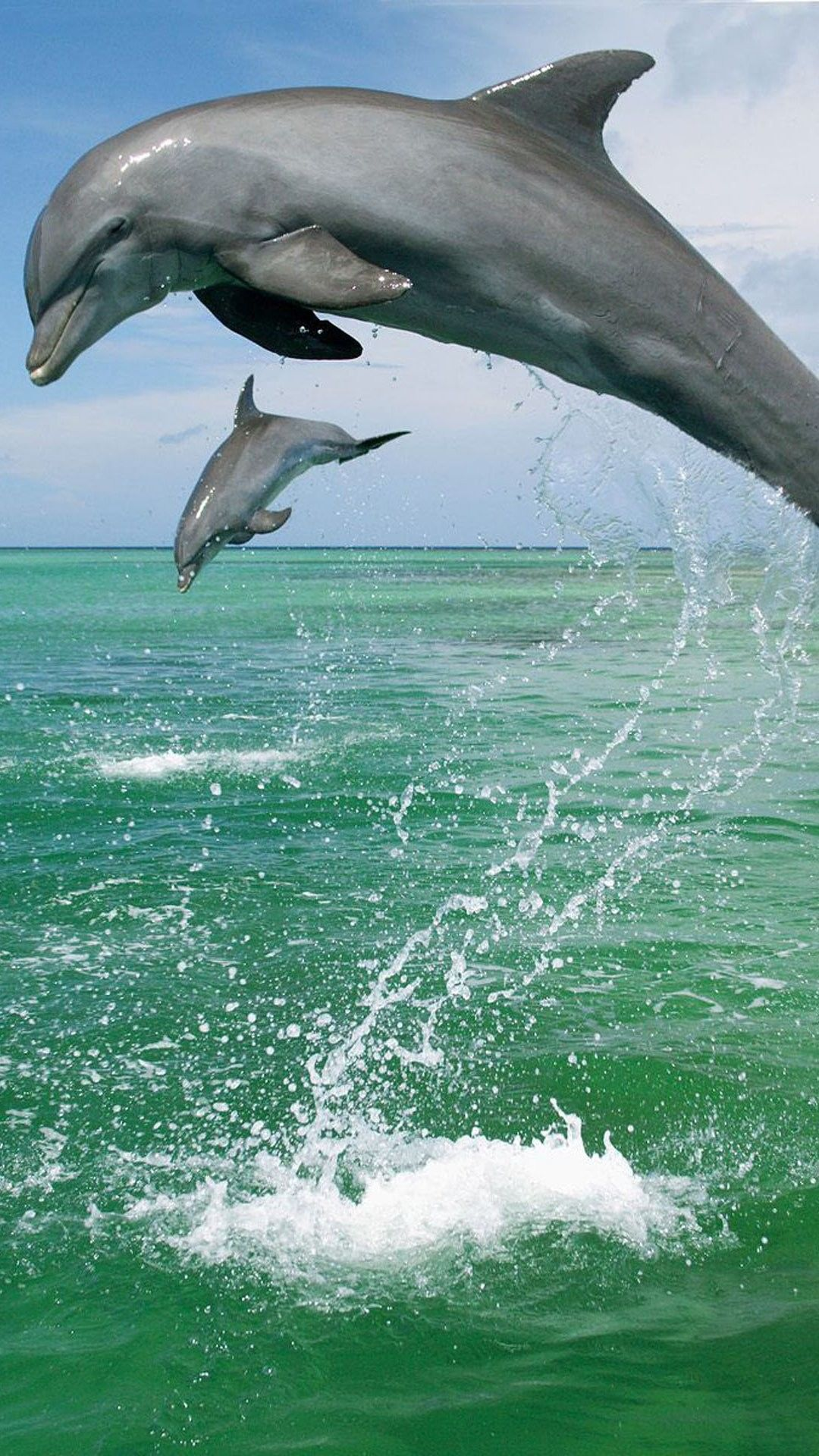 Dolphins iPhone 6 Plus Wallpaper 14689 Animals iPhone 6