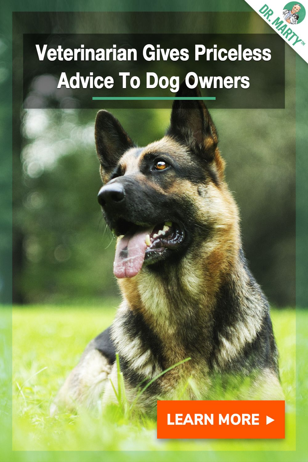 Veterinarian Gives Priceless Advice To Dog Owners Canine Care