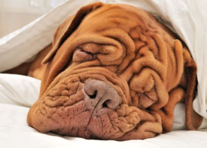 Get comfortable and rest easy! This study say's sleeping on your side doesn't give you wrinkles! http://onlinelibrary.wiley.com/doi/10.1111/dsu.12266/abstract