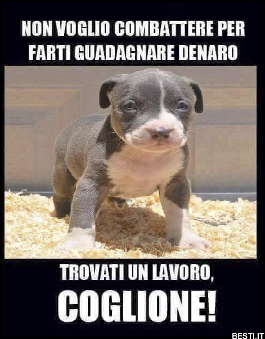 Frasi Sui Cani Trovati.Immagini Divertenti Foto Barzellette Video Immagini Whatsapp