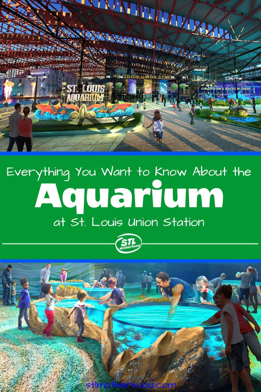 Things To Do In St Louis Aquarium - Aquarium Views