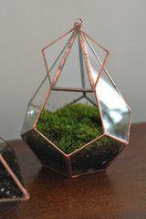 Diamond Terrarium with Kit