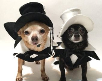 Wedding tuxedo for dogs Formal dog tuxedo Custom by AnnaHappydog
