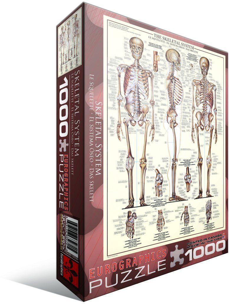 Amazon.com: Skeletal System (Chart) - 1000 Piece Puzzle: Toys ...