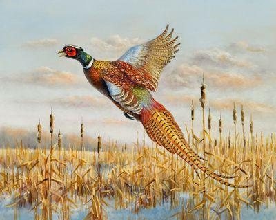 2010 Wisconsin Pheasant Stamp Winning Entry Pheasant