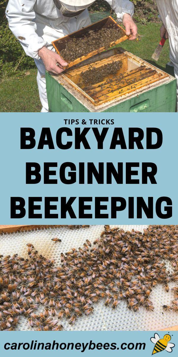 Beekeeping Mistakes to Avoid - Carolina Honeybees in 2020 ...