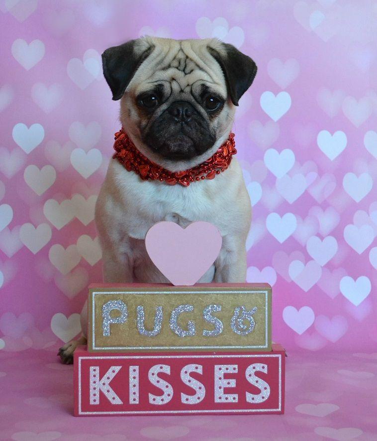 Pugs Kisses Valentine Our Pug Boo Lefou Valentine Pug Dog