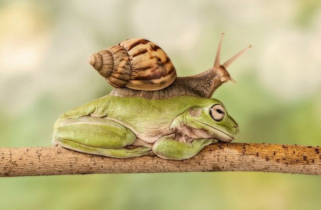 graciosas-fotos-de-animales-comportandose-de-manera-extraña