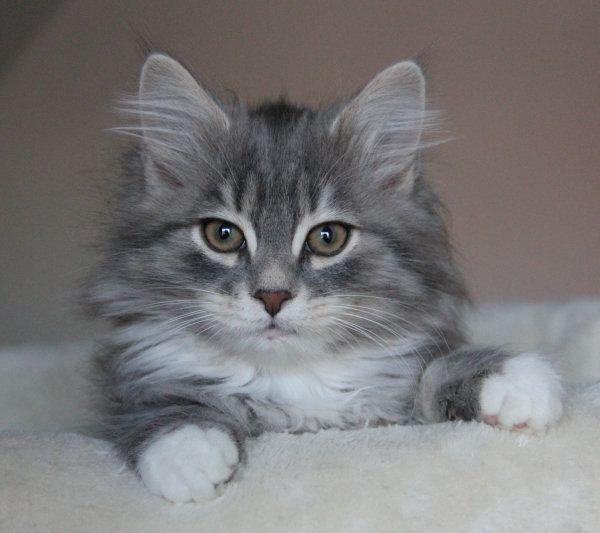 Unbenannt Hubsche Katzen Niedliche Tierbabys Schonen Katzen