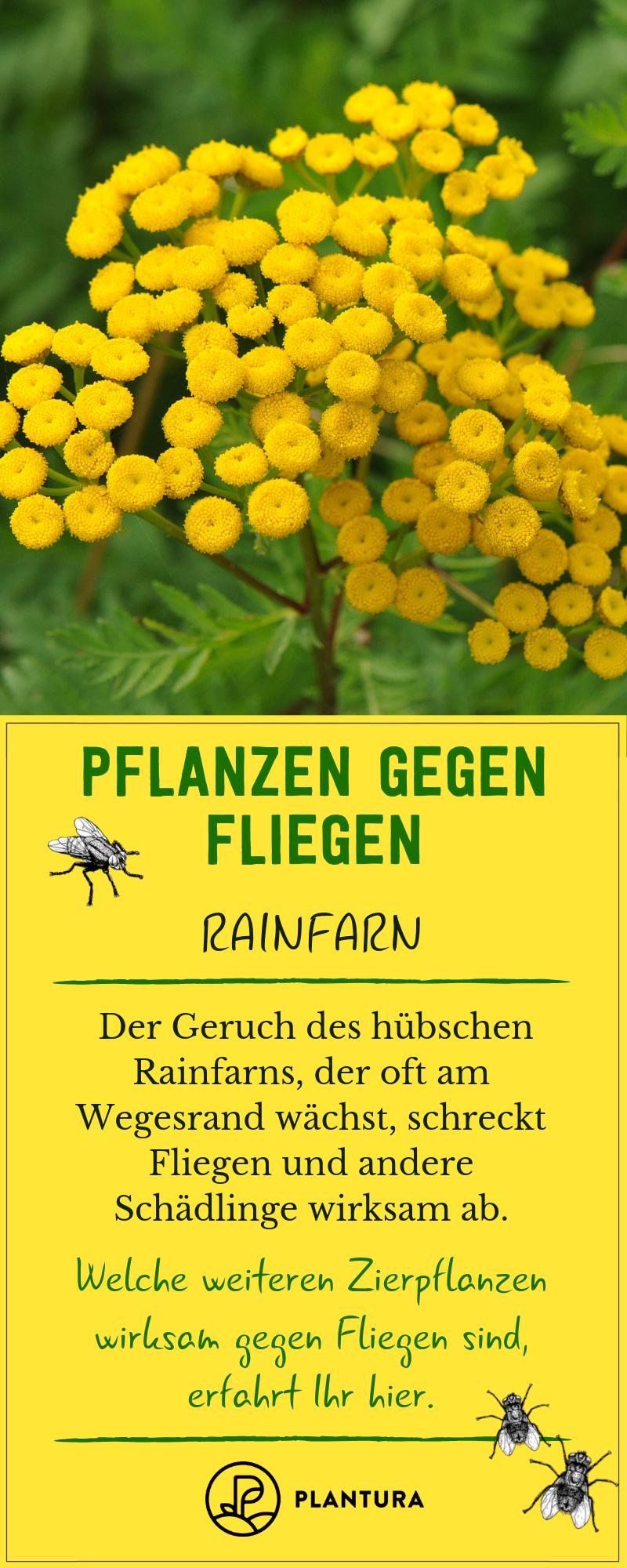Pflanzen Gegen Fliegen Lavendel Tomaten Co Plantura Pflanzen Garden Care Schadlinge