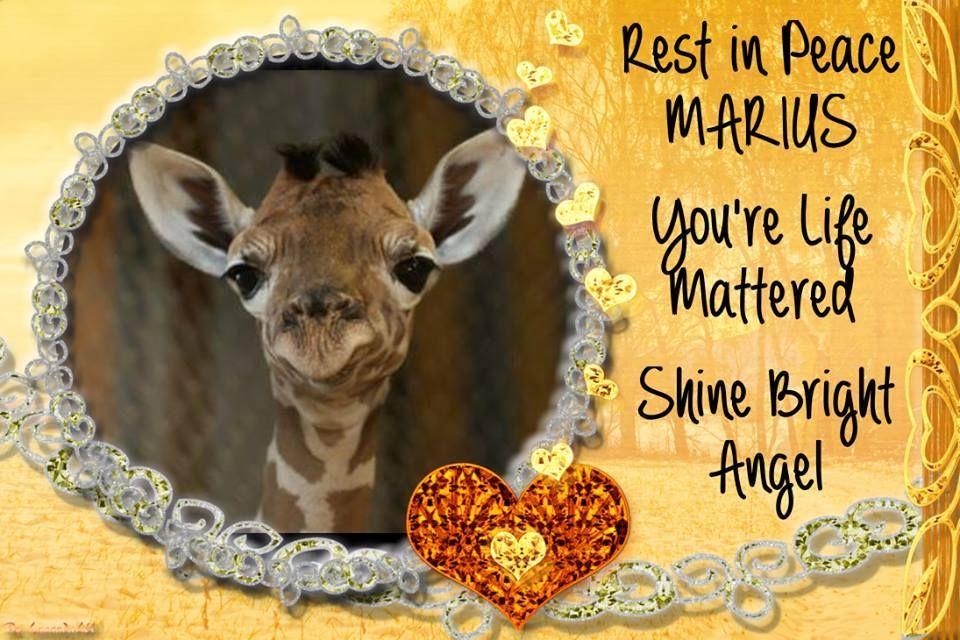 Quotes Against Zoos. QuotesGram