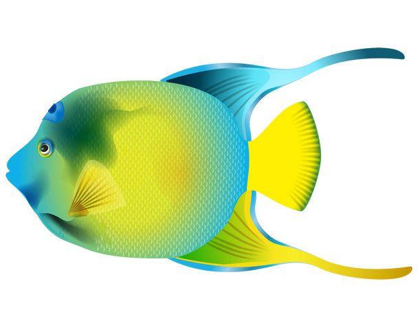 Water Baby Image, Angelfish Cutout, Angelfish Image,Fish Image,Fish ...