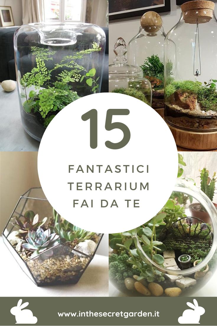 Terrario Per Piante Grasse terrarium fai da te | fai da te giardinaggio, piante da