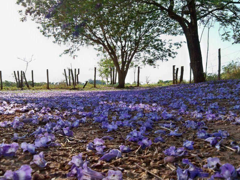 flores ao chão