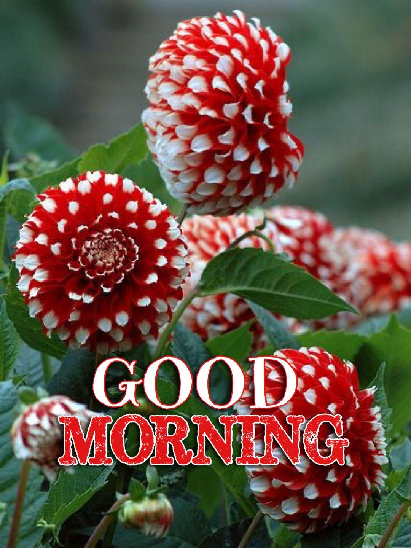 Pin by Madhu Rokaya on Good morning in 2020 Morning