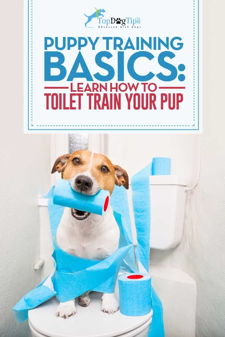 How To Toilet Train A Puppy Effectively Step By Step Video Instructions Puppy Training Toilet Training Training Your Dog