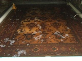 Pet urine being soaked out of an Oriental rug to remove the odor