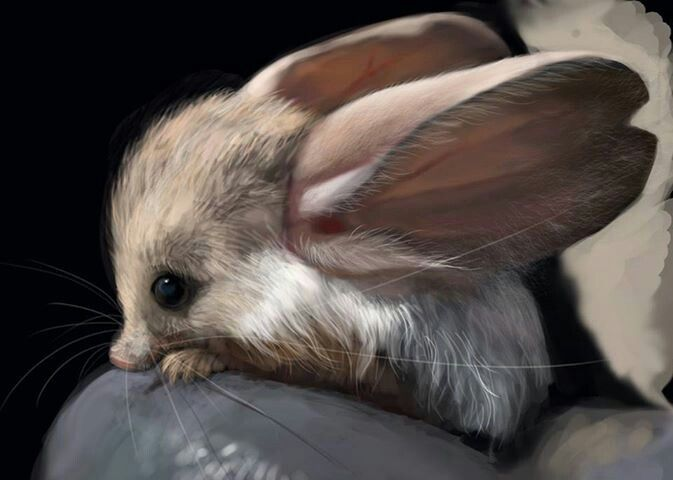 Jerbea the cutest animal in the world!!!!   Only Animals ... The Cutest Baby Animal In The World