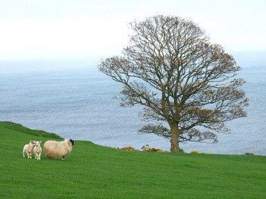 Ireland elyse601