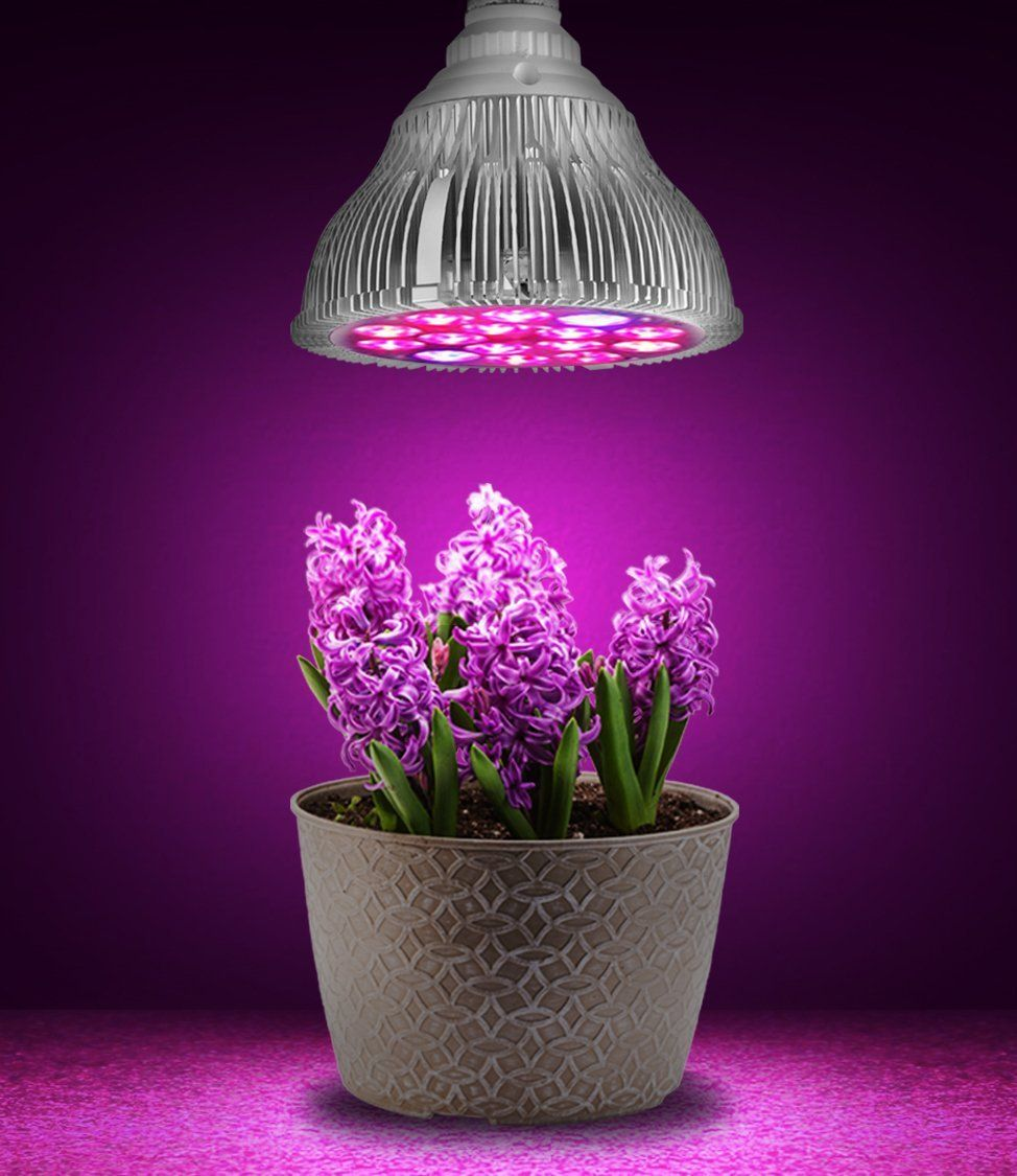 Best Led Grow Lights For Indoor Plants Commercial Led 640 x 480