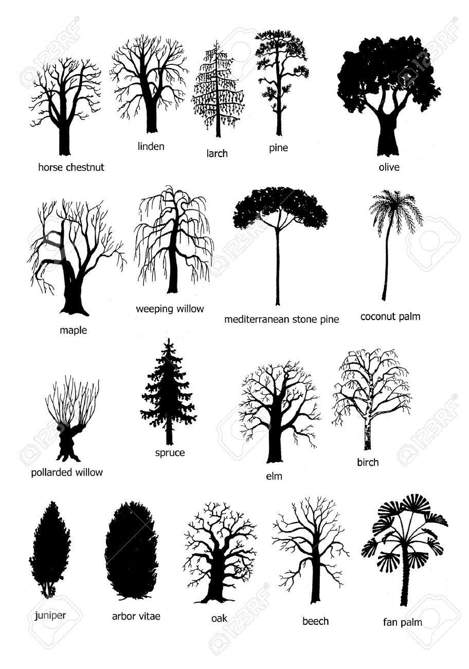 Photo of 18 types d'arbres, noir et blanc