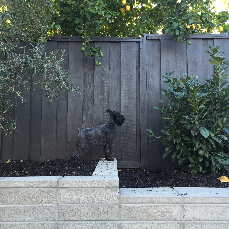 Fence Colour Painted Wood Fence Staining Wood Fence Grey Fences
