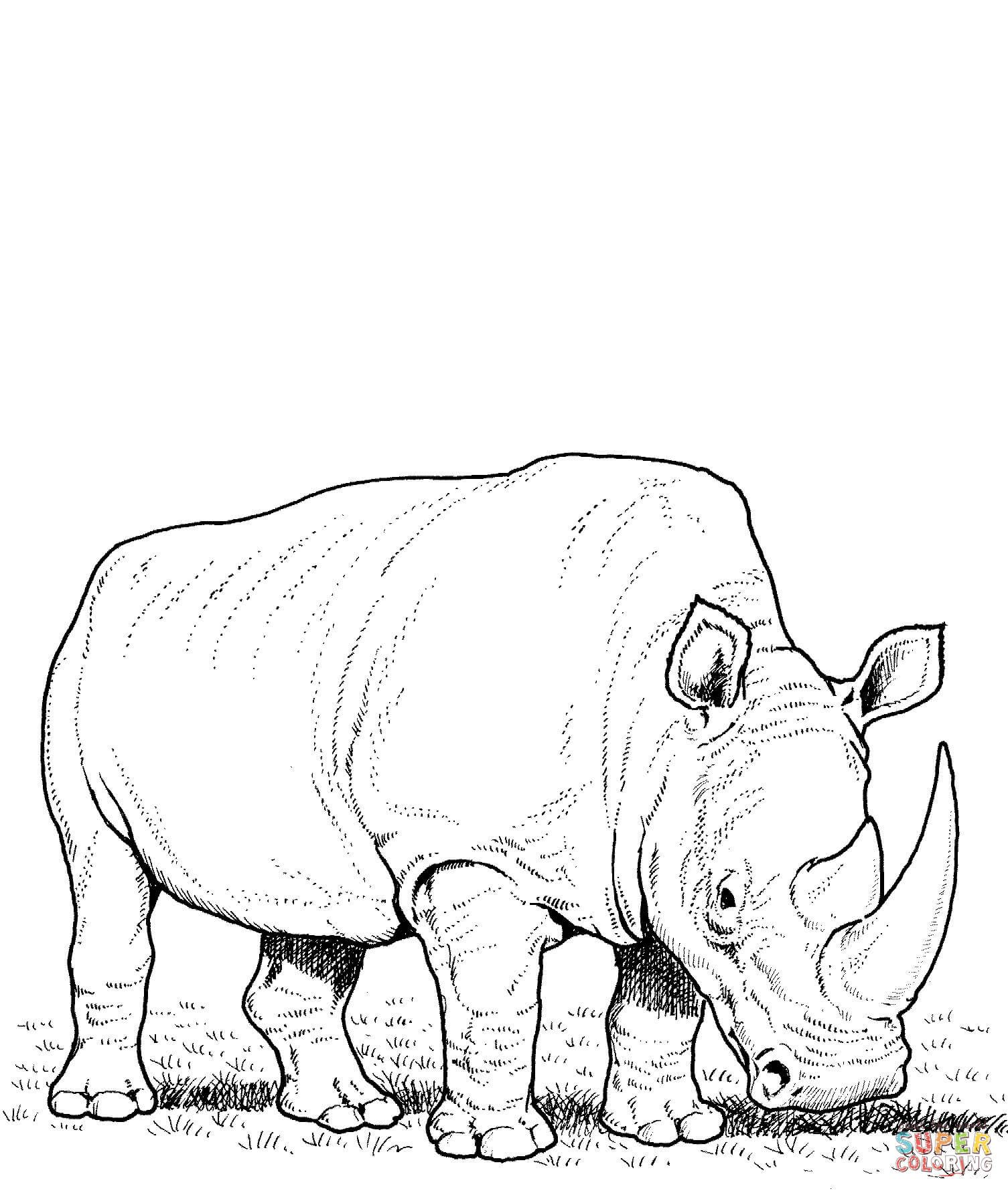 White Rhino Eating Grass Coloring Page Free Printable Coloring