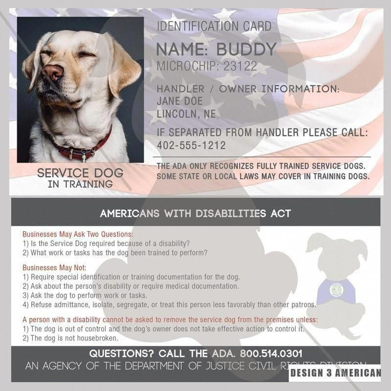 Command For Dog Training Dogs Need Their Gums And Teeth As Much