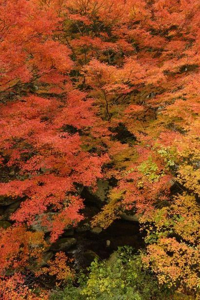 Nametoko, Ehime, Japan