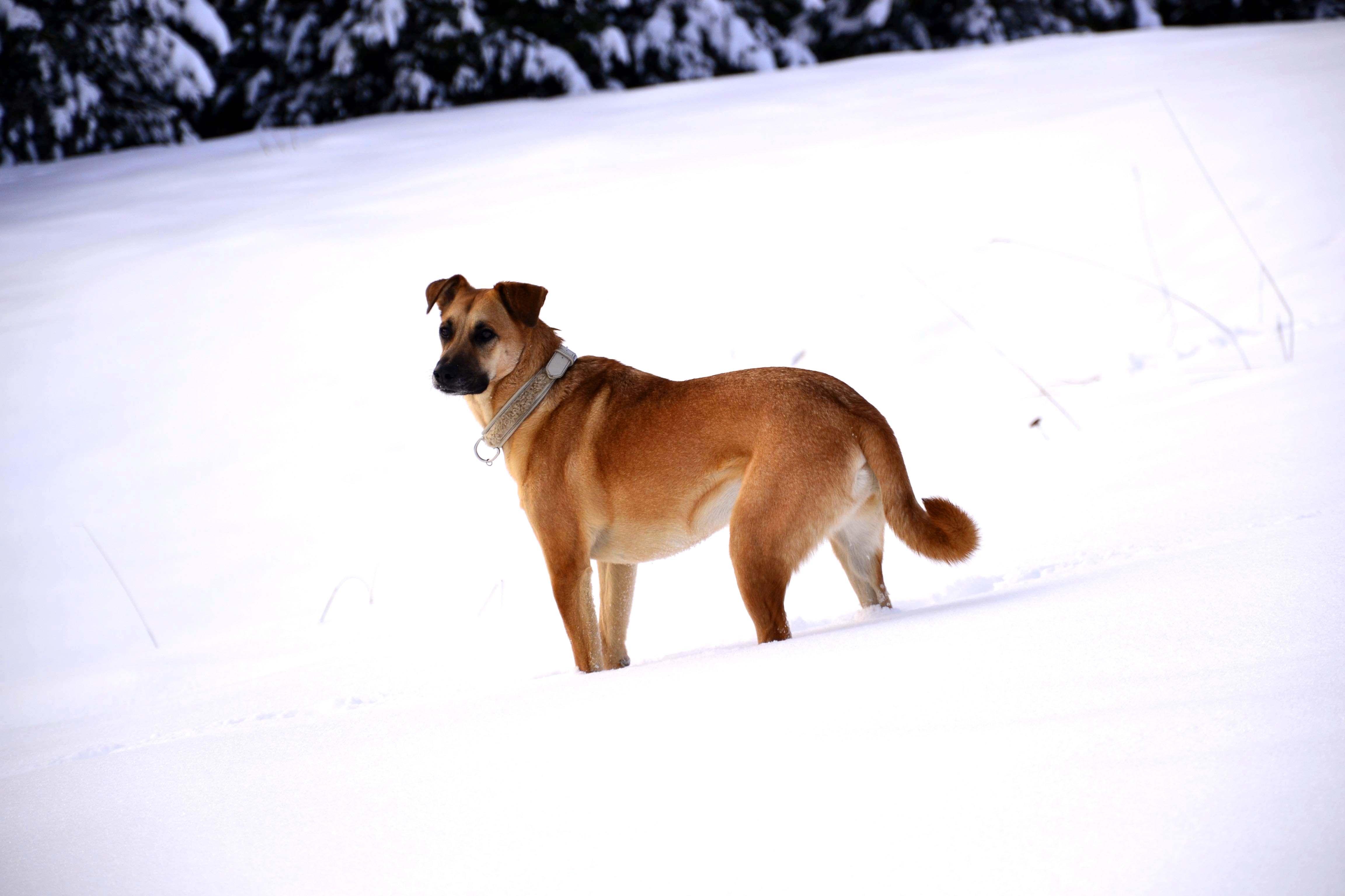 Viola, con il collare Madel nel colore Ice, controlla che nessuno si avvicini alla sua padrona!! www.isiandfriends.it