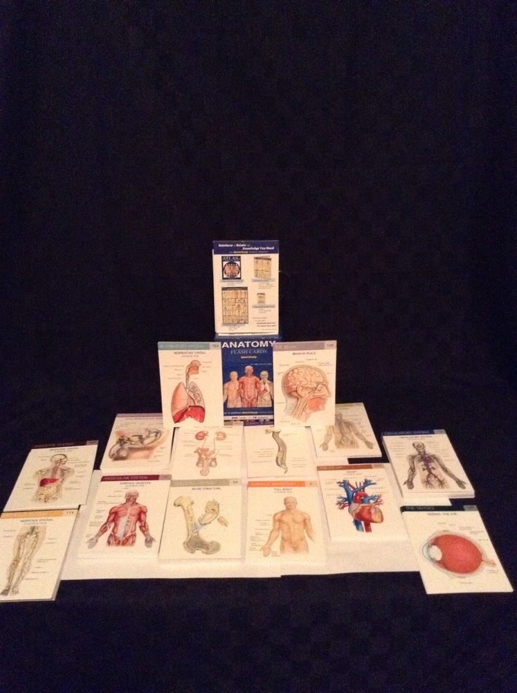 Quickstudy Anatomy Set Of 300 Flash Cards High School College Color