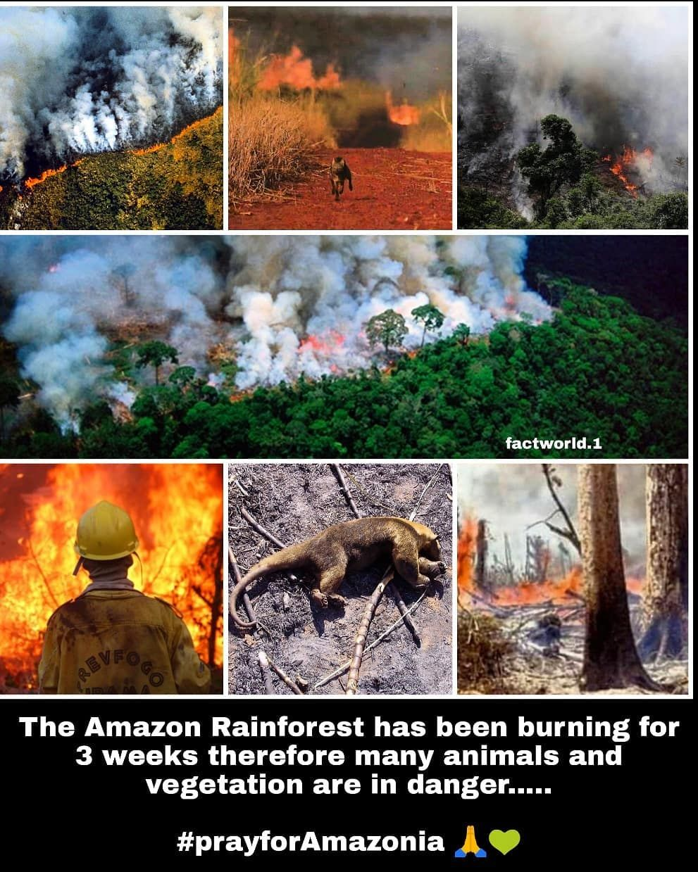 Forest Fires In The Amazon Are Generating Smoke That Can Be Seen