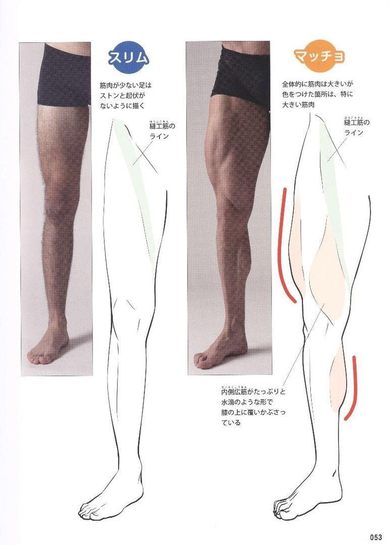 Reference Drawing Muscles Guide Male Forreference Guide For Drawing Male Muscles 160 Fotografij Anatomy Tutorial Anatomy Reference Leg Anatomy