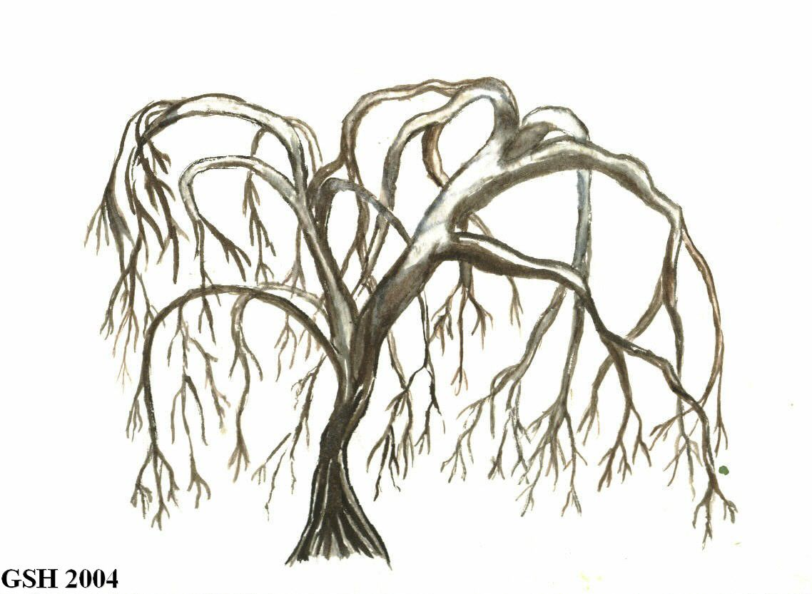 Uncategorized How To Draw A Weeping Willow getting my creative juices flowing tree art watercolor painting body art