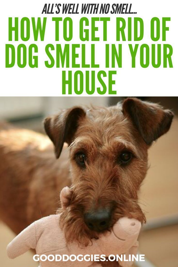 How to get rid of dog smell in the house dog smells