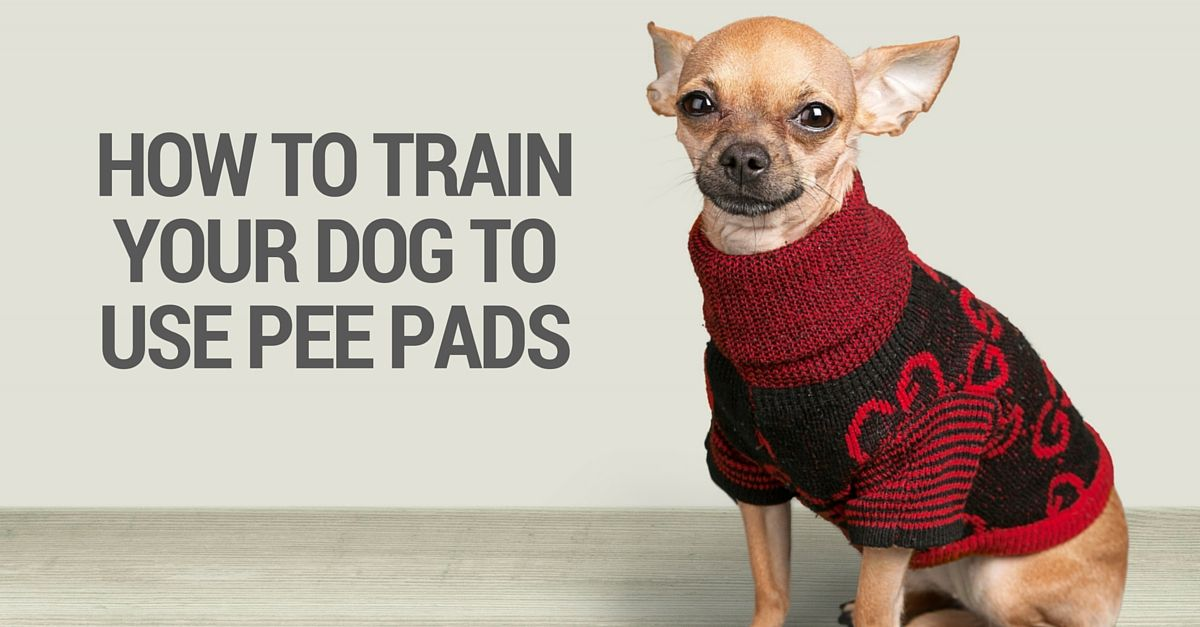 How To Train Your Dog To Use Pee Pads Or Fake Grass Pads Dog Pee