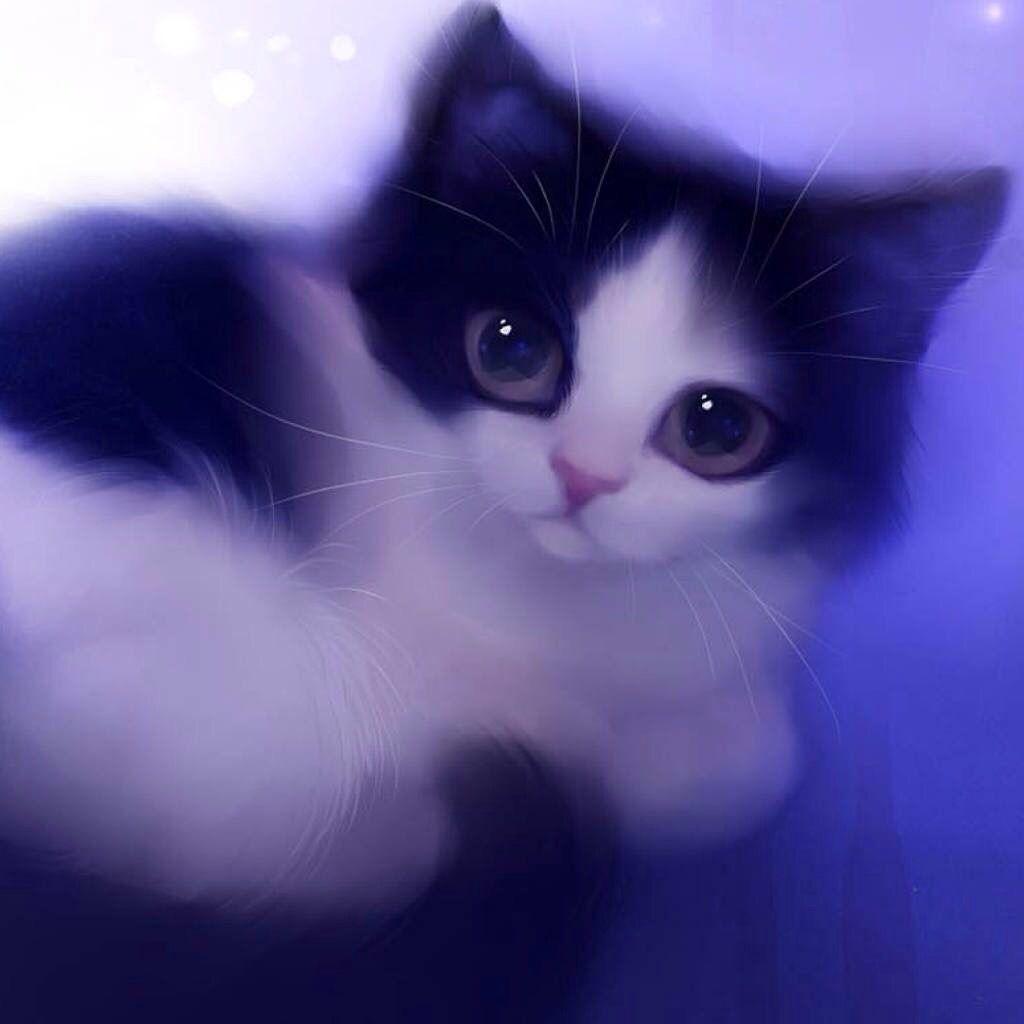 Little Kiten Cute Cat Wallpaper Kitten Wallpaper Cat Wallpaper