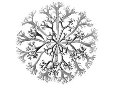 visualcomplexity.com   Chondrus Crispus