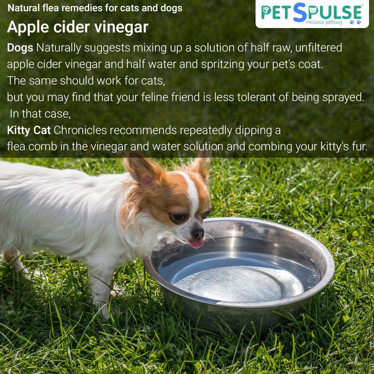 Apple cider vinegar pets petshealth dog cat puppy