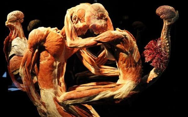 Body Worlds: il cadavere che diventa opera d'arte  http://artecracy.eu/cadavere-diventa-opera-darte/